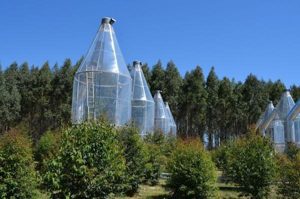 """科学家发现澳大利亚桉树可通过""""排汗""""应对酷热天气"""